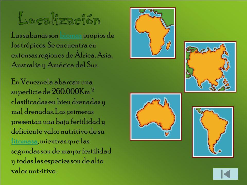 Localización Las sabanas son biomas propios de los trópicos. Se encuentra en extensas regiones de África, Asia, Australia y América del Sur.