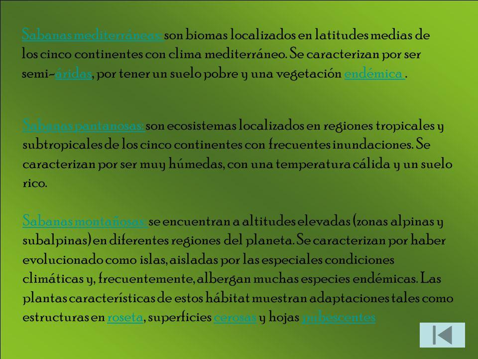 Sabanas mediterráneas: son biomas localizados en latitudes medias de los cinco continentes con clima mediterráneo. Se caracterizan por ser semi-áridas, por tener un suelo pobre y una vegetación endémica .