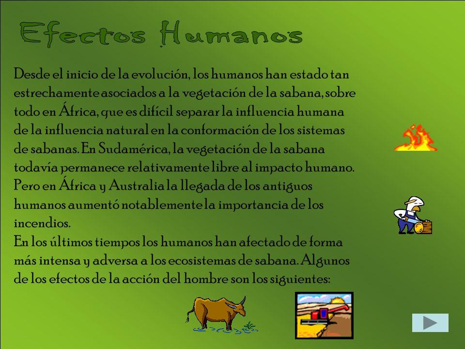 Efectos Humanos