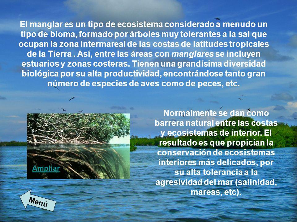 El manglar es un tipo de ecosistema considerado a menudo un tipo de bioma, formado por árboles muy tolerantes a la sal que ocupan la zona intermareal de las costas de latitudes tropicales de la Tierra . Así, entre las áreas con manglares se incluyen estuarios y zonas costeras. Tienen una grandísima diversidad biológica por su alta productividad, encontrándose tanto gran número de especies de aves como de peces, etc.