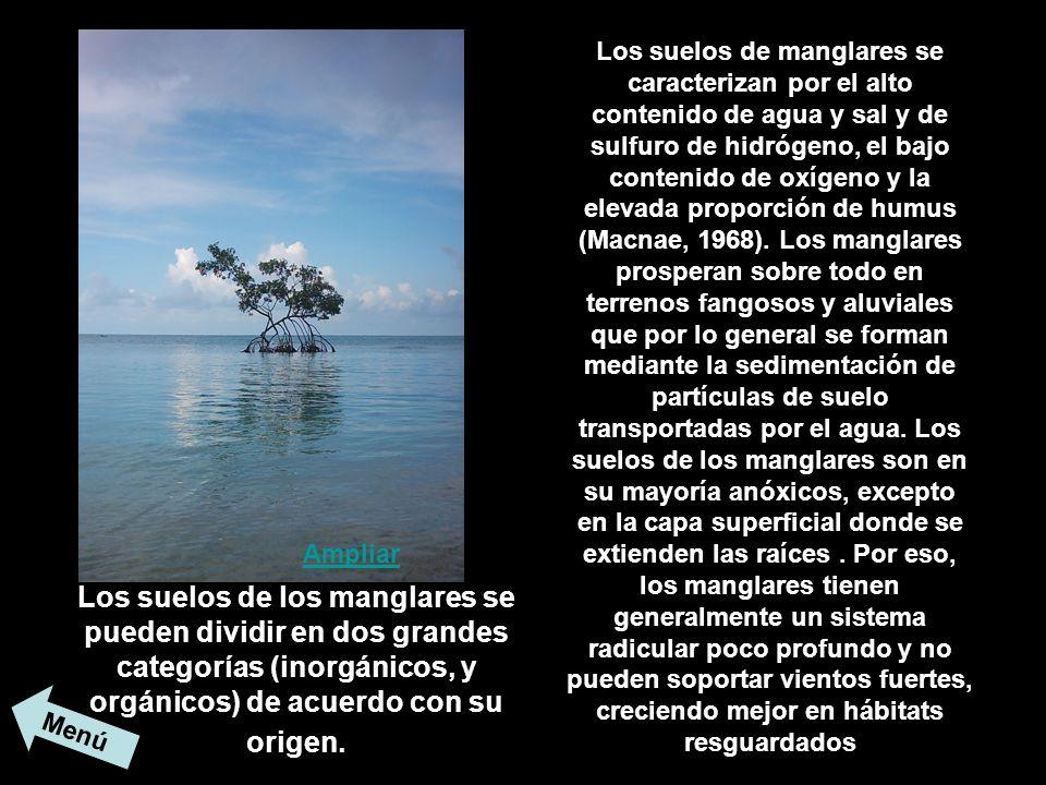 Los suelos de manglares se caracterizan por el alto contenido de agua y sal y de sulfuro de hidrógeno, el bajo contenido de oxígeno y la elevada proporción de humus (Macnae, 1968). Los manglares prosperan sobre todo en terrenos fangosos y aluviales que por lo general se forman mediante la sedimentación de partículas de suelo transportadas por el agua. Los suelos de los manglares son en su mayoría anóxicos, excepto en la capa superficial donde se extienden las raíces . Por eso, los manglares tienen generalmente un sistema radicular poco profundo y no pueden soportar vientos fuertes, creciendo mejor en hábitats resguardados