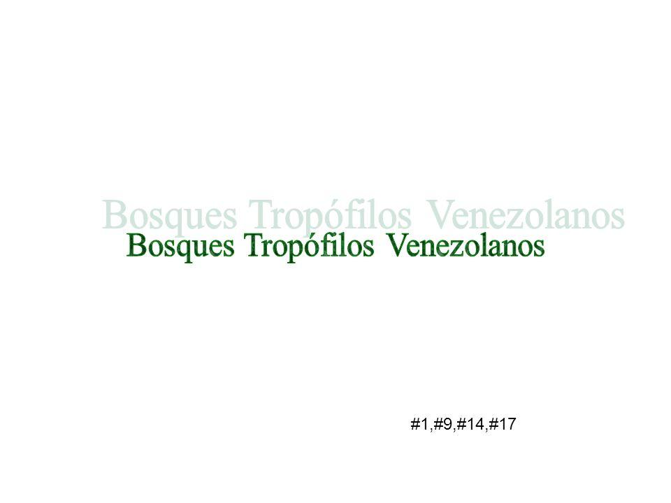 Bosques Tropófilos Venezolanos