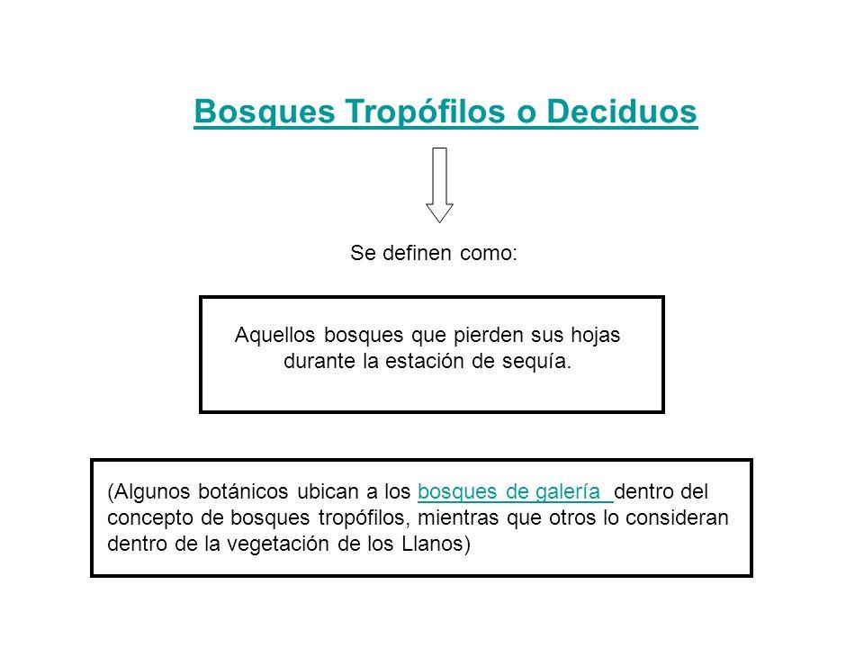 Bosques Tropófilos o Deciduos