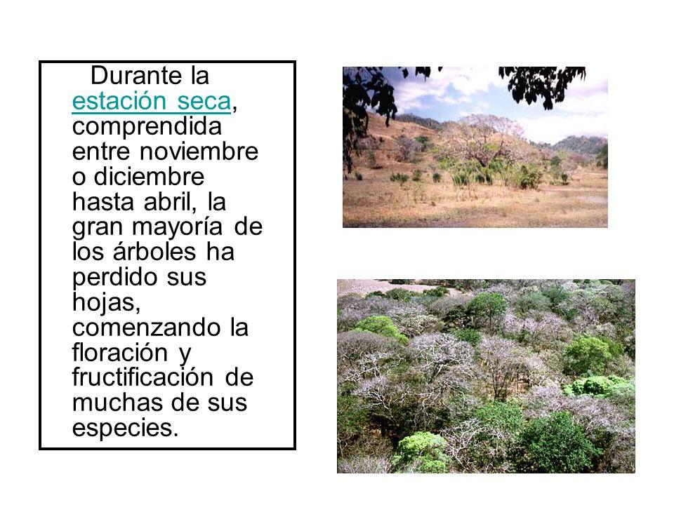 Durante la estación seca, comprendida entre noviembre o diciembre hasta abril, la gran mayoría de los árboles ha perdido sus hojas, comenzando la floración y fructificación de muchas de sus especies.