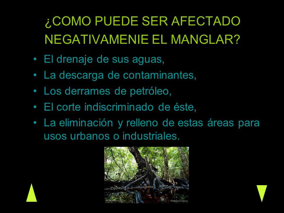 ¿COMO PUEDE SER AFECTADO NEGATIVAMENIE EL MANGLAR