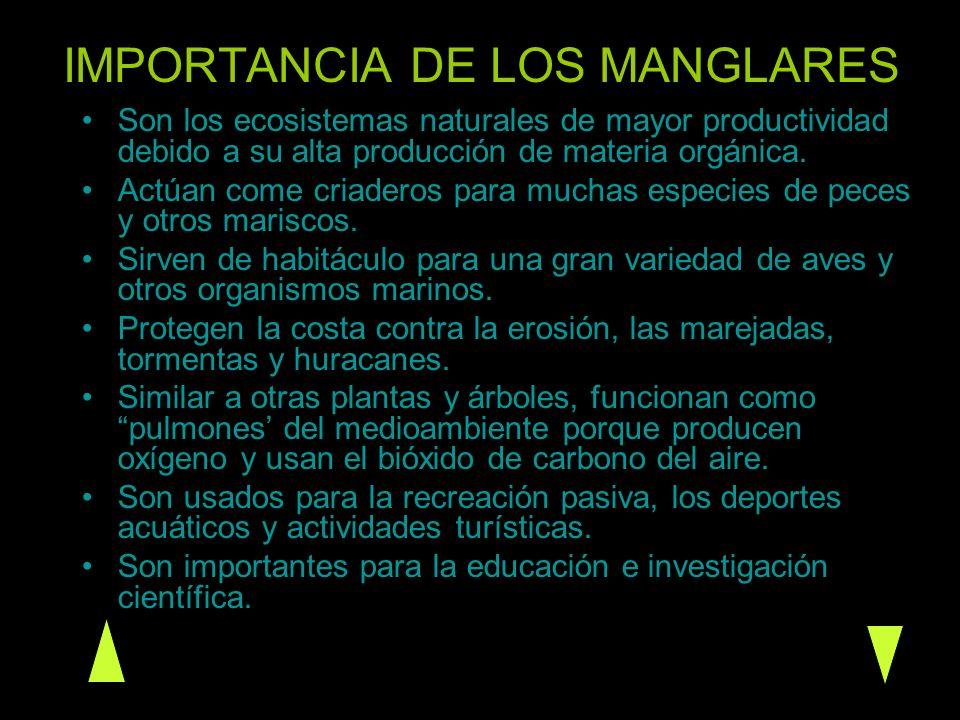 IMPORTANCIA DE LOS MANGLARES