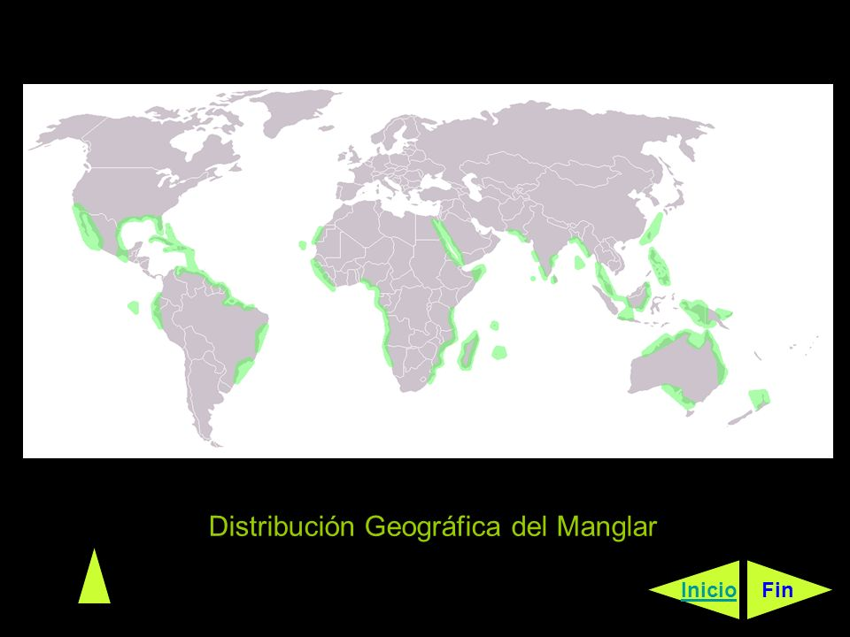 Distribución Geográfica del Manglar