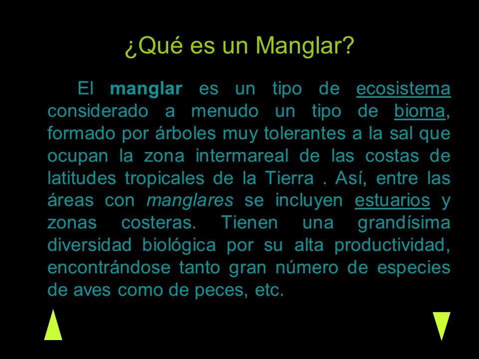 ¿Qué es un Manglar