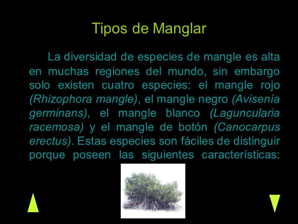 Tipos de Manglar