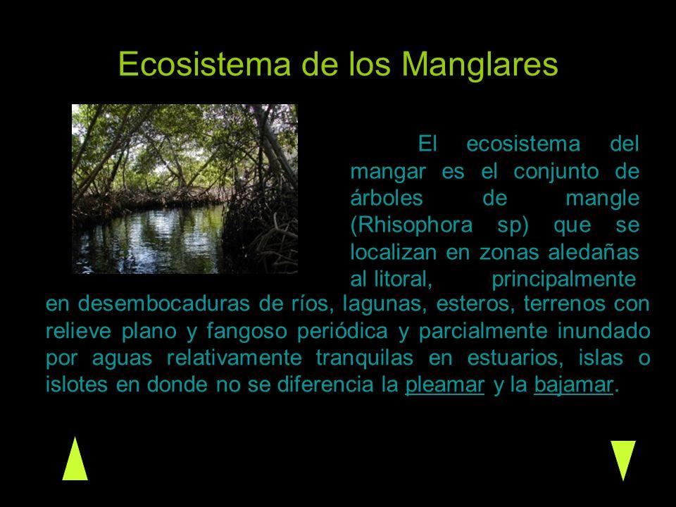 Ecosistema de los Manglares