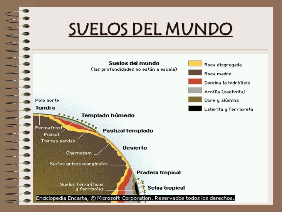 SUELOS DEL MUNDO