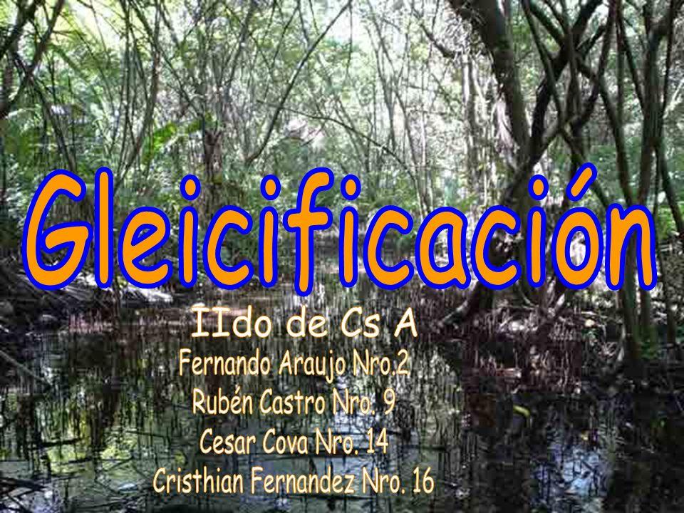 Cristhian Fernandez Nro. 16
