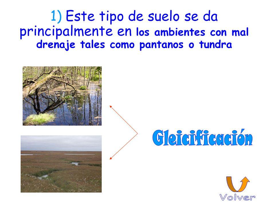 1) Este tipo de suelo se da principalmente en los ambientes con mal drenaje tales como pantanos o tundra