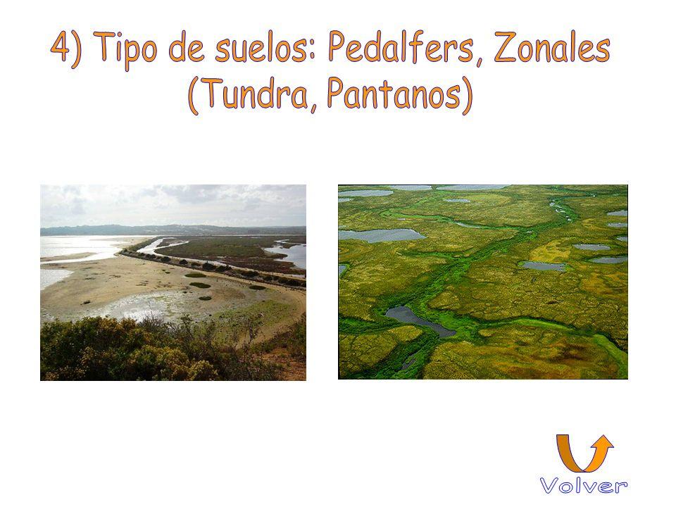 4) Tipo de suelos: Pedalfers, Zonales