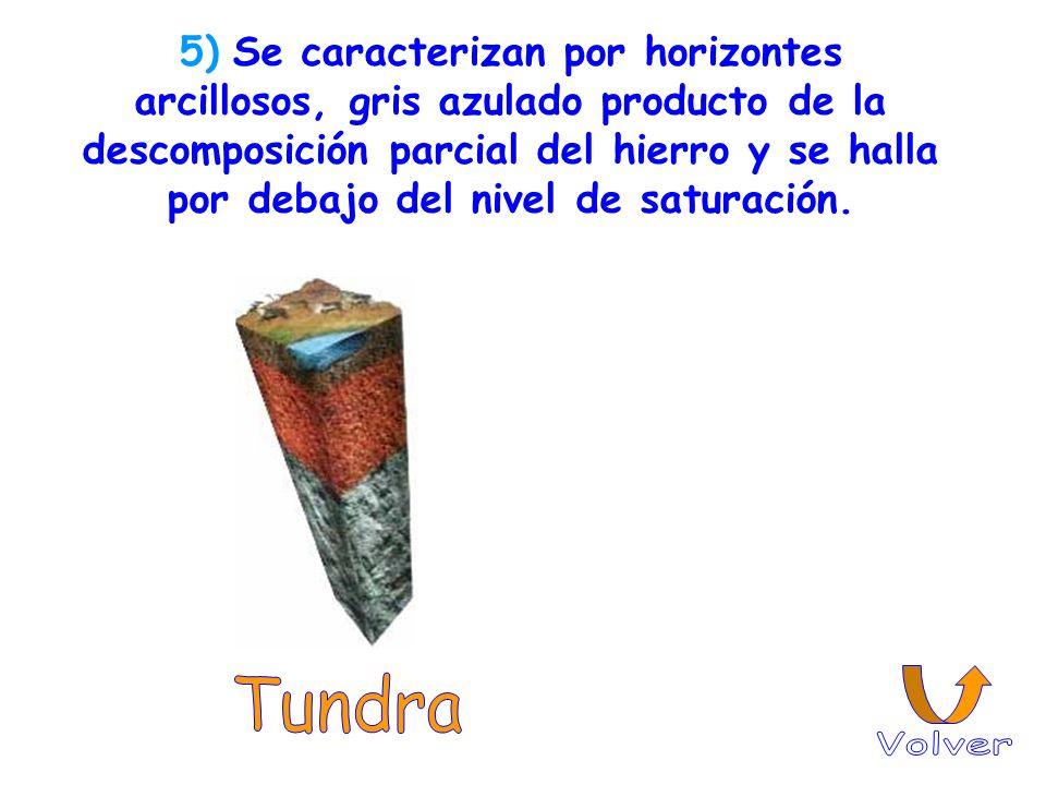 5) Se caracterizan por horizontes arcillosos, gris azulado producto de la descomposición parcial del hierro y se halla por debajo del nivel de saturación.