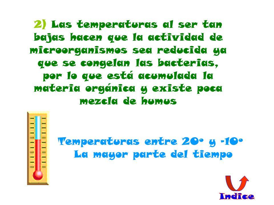 2) Las temperaturas al ser tan bajas hacen que la actividad de microorganismos sea reducida ya que se congelan las bacterias, por lo que está acumulada la materia orgánica y existe poca mezcla de humus