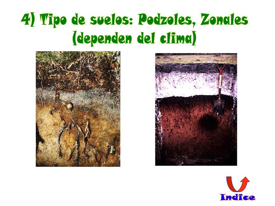 4) Tipo de suelos: Podzoles, Zonales