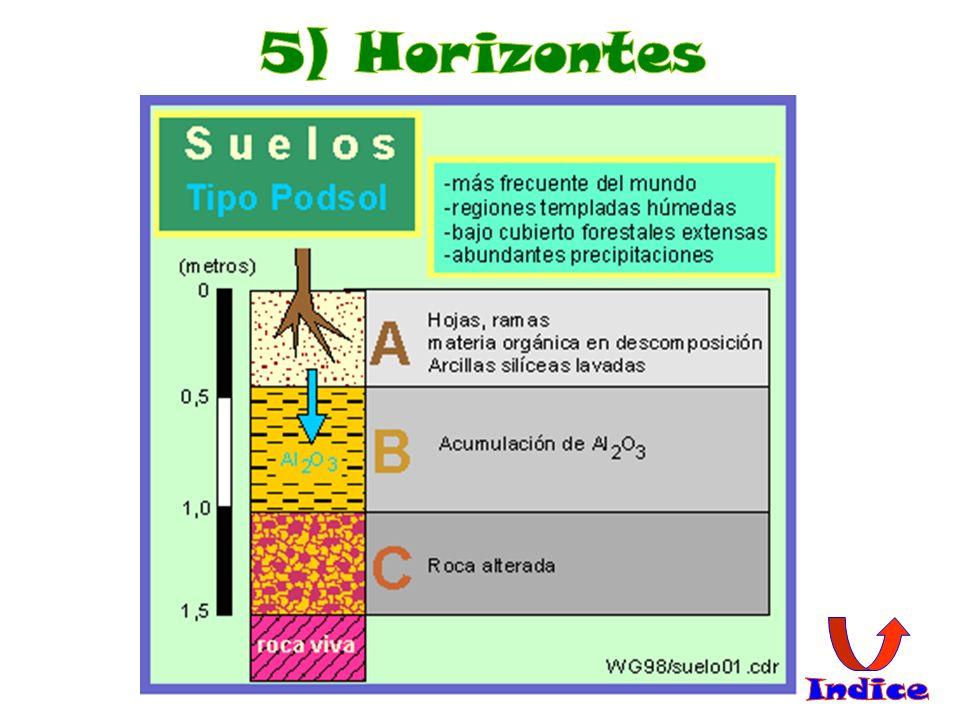 5) Horizontes Indice