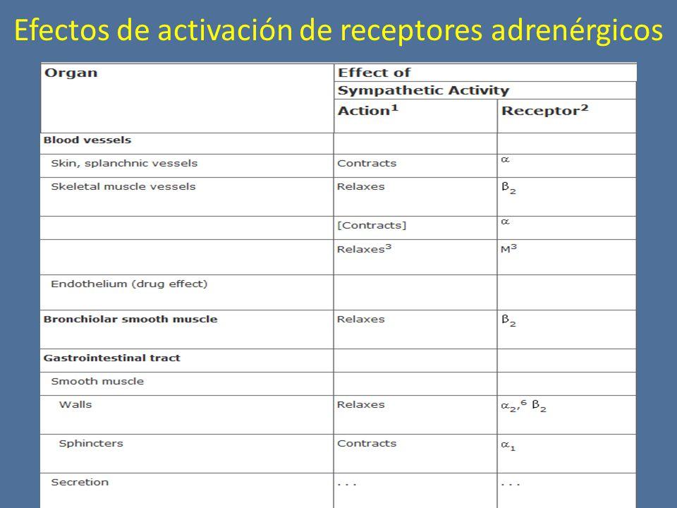 Efectos de activación de receptores adrenérgicos