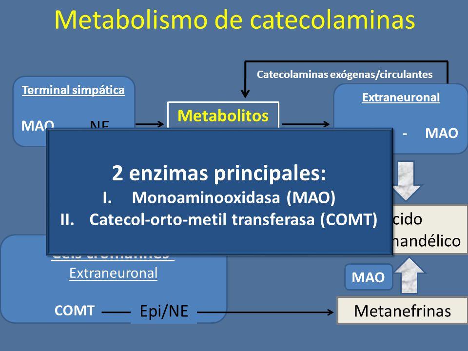 Metabolismo de catecolaminas