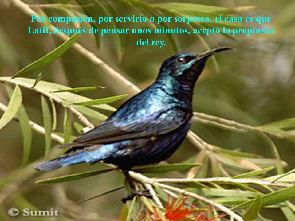 Por compasión, por servicio o por sorpresa, el caso es que Latif, después de pensar unos minutos, aceptó la propuesta del rey.