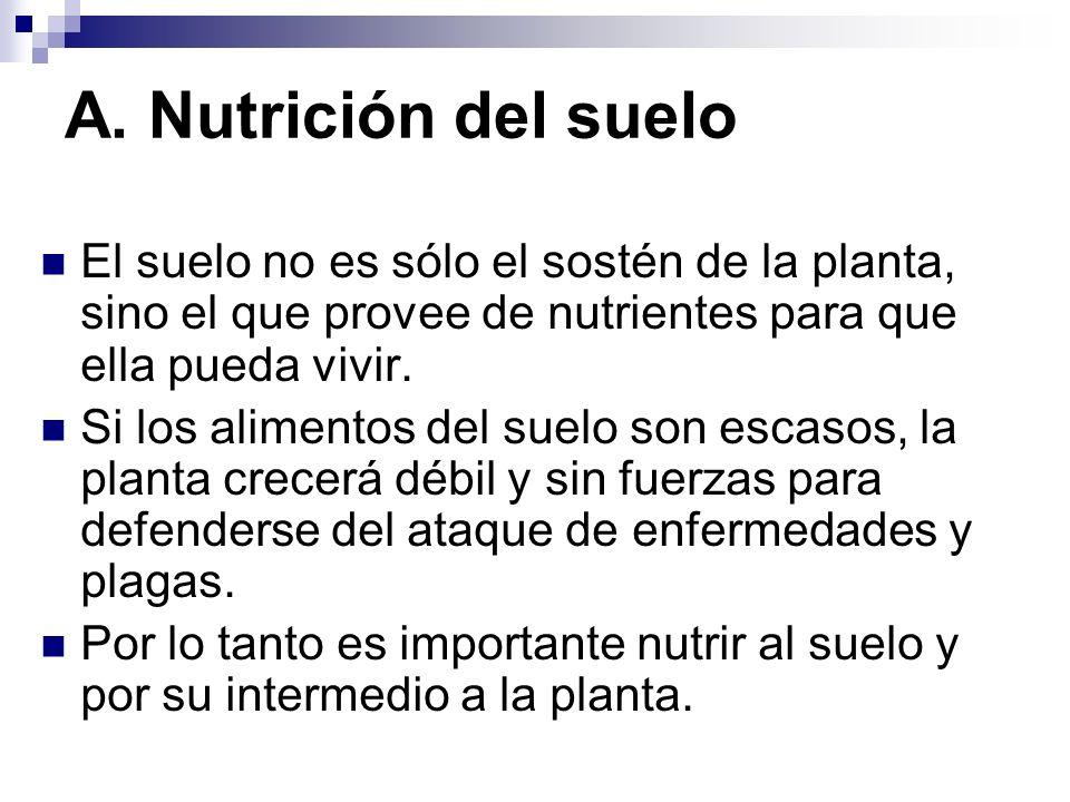 A. Nutrición del suelo El suelo no es sólo el sostén de la planta, sino el que provee de nutrientes para que ella pueda vivir.