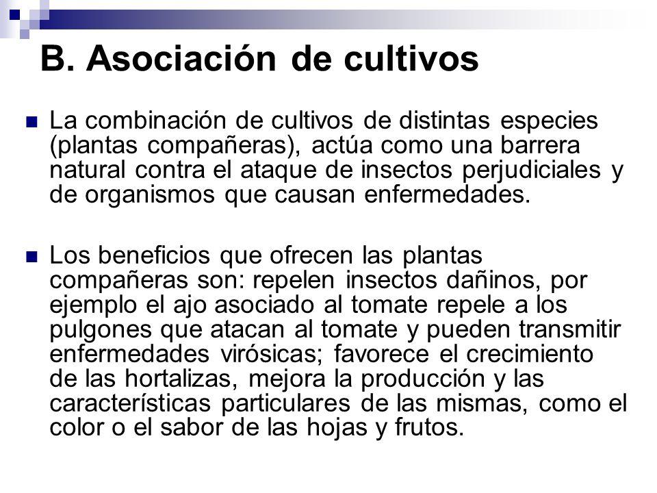B. Asociación de cultivos