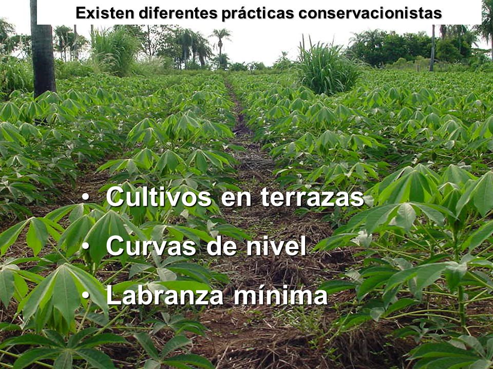Existen diferentes prácticas conservacionistas