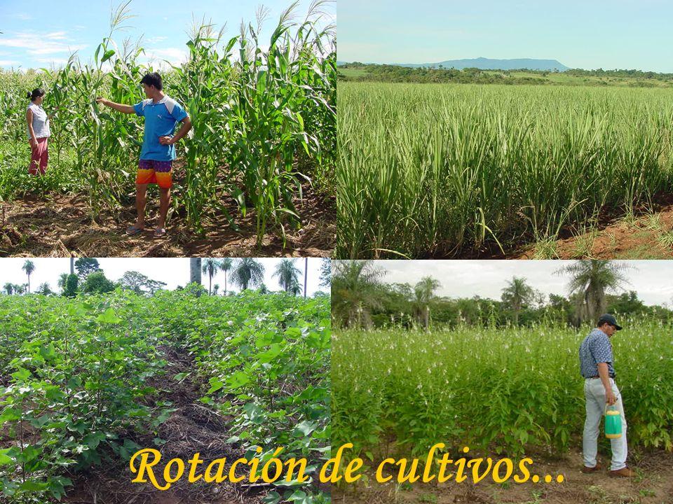 Rotación de cultivos...