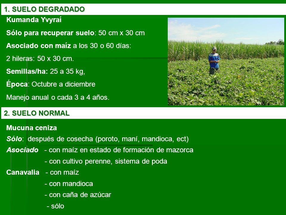 1. SUELO DEGRADADO Kumanda Yvyraí. Sólo para recuperar suelo: 50 cm x 30 cm. Asociado con maíz a los 30 o 60 días: