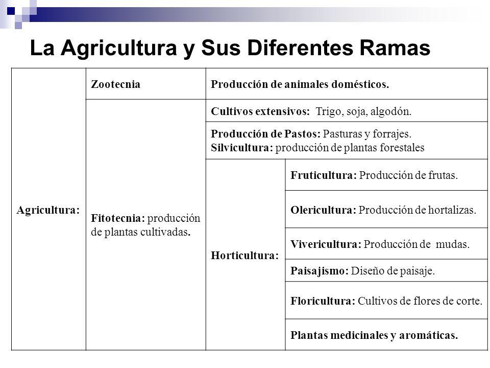 La Agricultura y Sus Diferentes Ramas