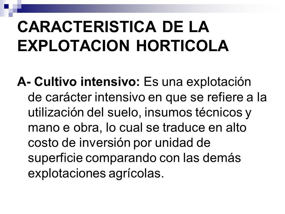 CARACTERISTICA DE LA EXPLOTACION HORTICOLA