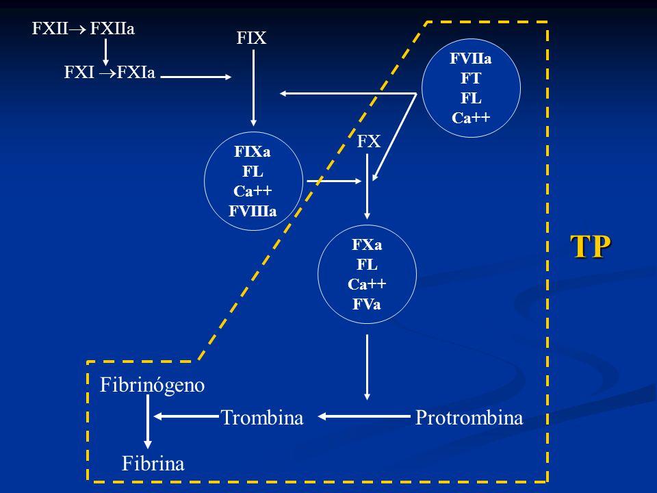 TP Fibrinógeno Trombina Protrombina Fibrina FXII FXIIa FIX FXI FXIa