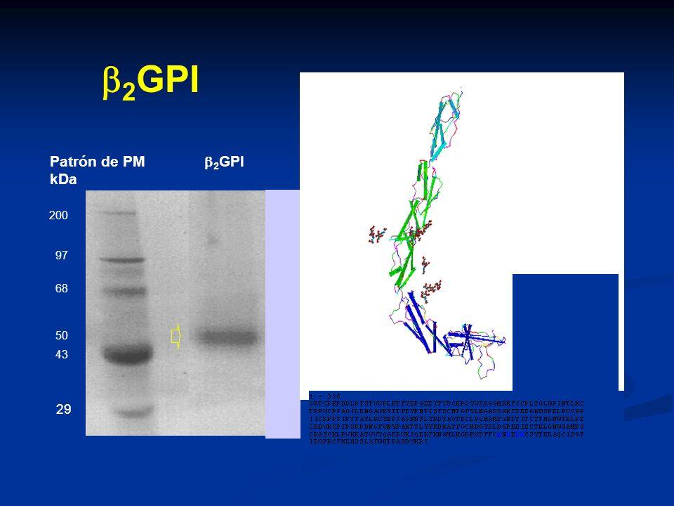 b2GPI Patrón de PM b2GPI kDa I II III 29 IV V NH2 88 200 97 68 50 43