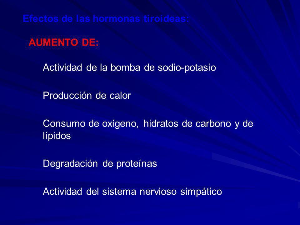 Efectos de las hormonas tiroideas:
