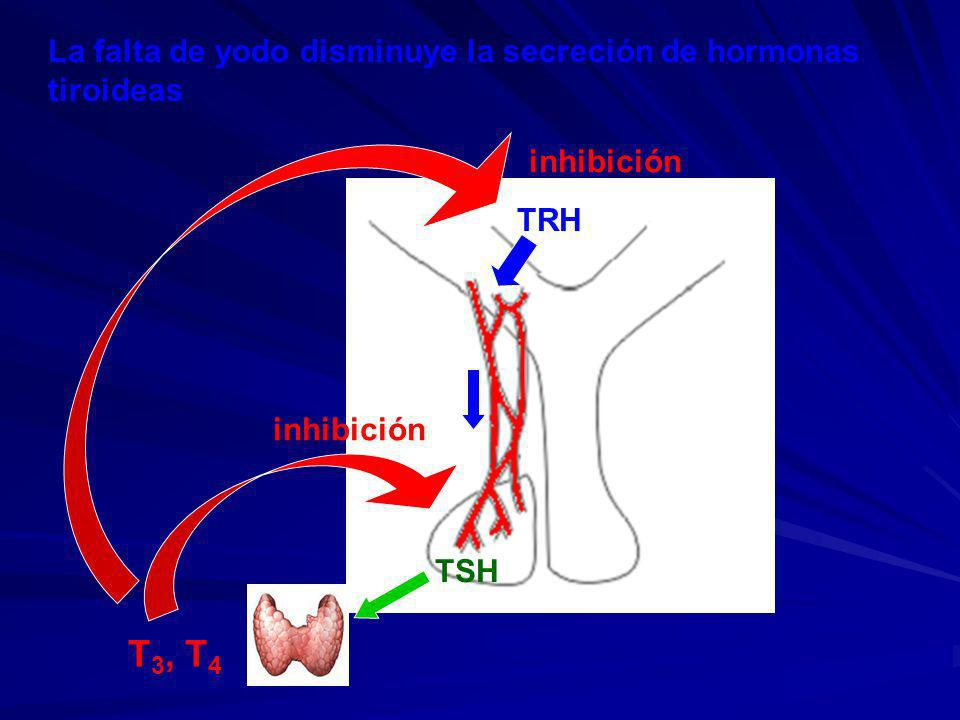 T3, T4 La falta de yodo disminuye la secreción de hormonas tiroideas