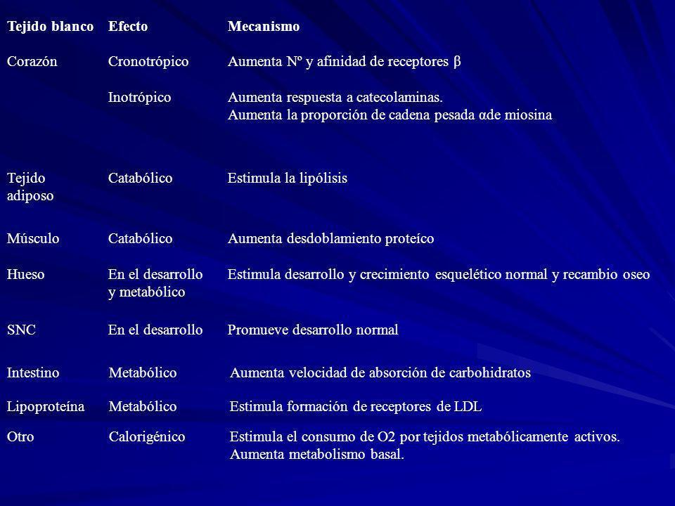 Tejido blanco Efecto. Mecanismo. Corazón. Cronotrópico. Aumenta Nº y afinidad de receptores β. Inotrópico.