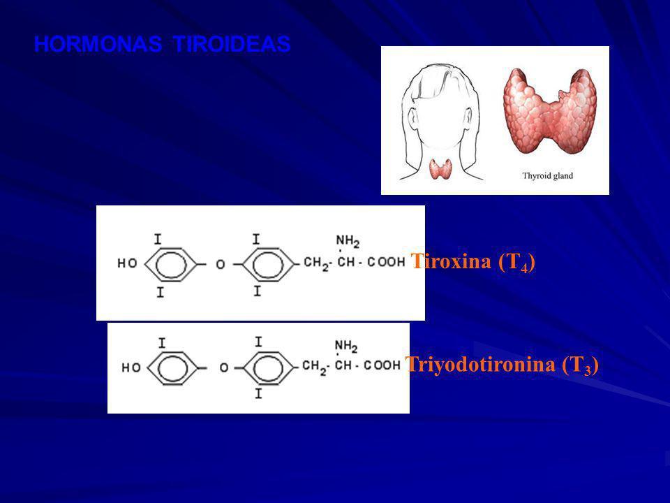 HORMONAS TIROIDEAS Tiroxina (T4) Triyodotironina (T3)