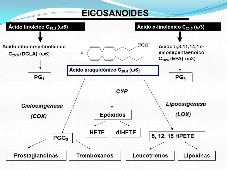 EICOSANOIDES PG1 PG3 Ciclooxigenasa (COX) PGG2 CYP Epóxidos