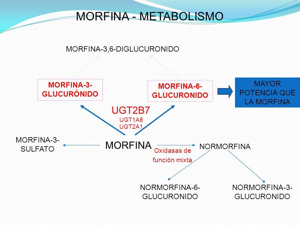 MORFINA-3-GLUCURÓNIDO MORFINA-6-GLUCURONIDO