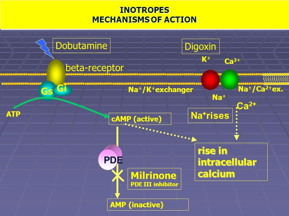 Meccanismo d'azione degli inotropi positivi