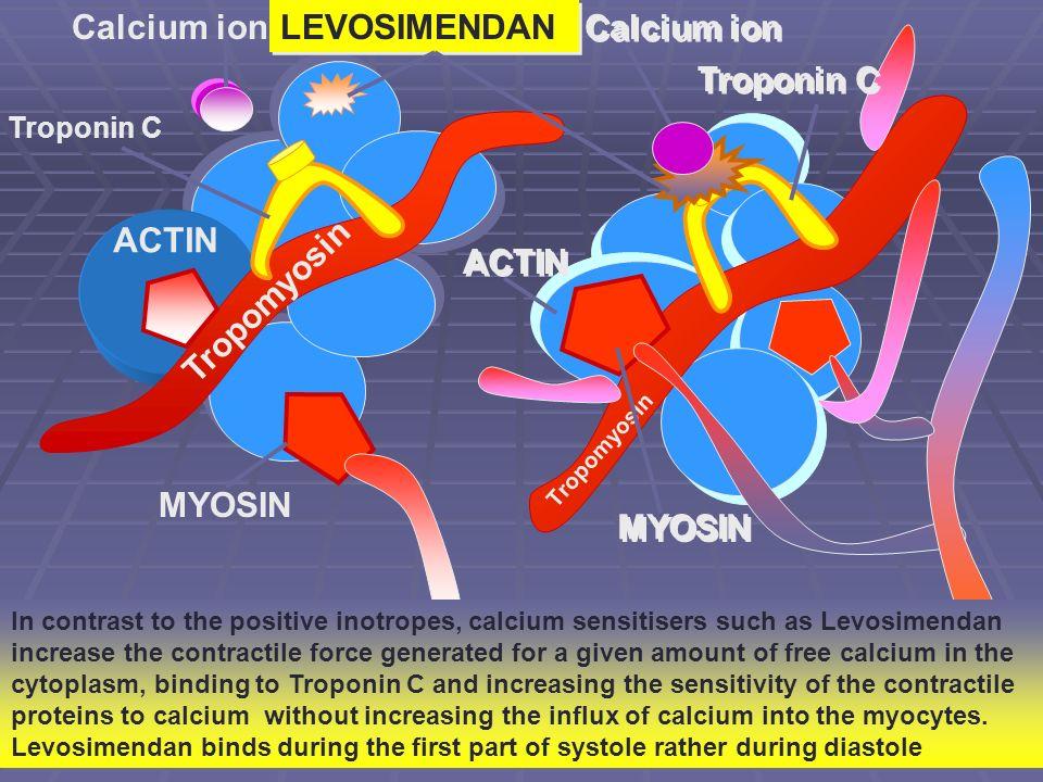 Calcium ion LEVOSIMENDAN Calcium ion Troponin C ACTIN ACTIN