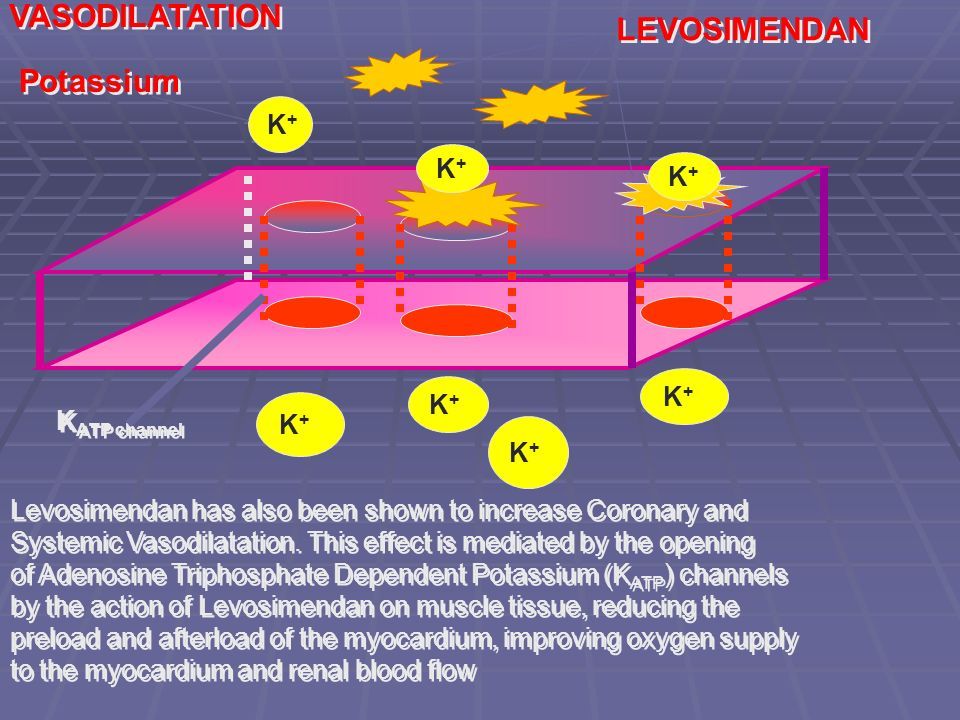 VASODILATATION LEVOSIMENDAN Potassium K+ K+ K+ K+ K+ KATP channel K+
