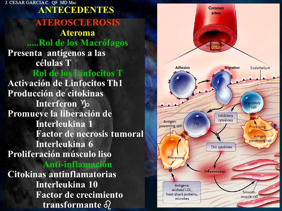Presenta antígenos a las células T Rol de los Linfocitos T