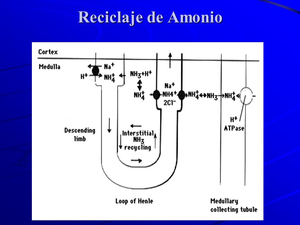 Reciclaje de Amonio