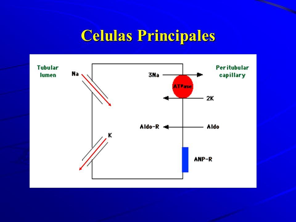 Celulas Principales