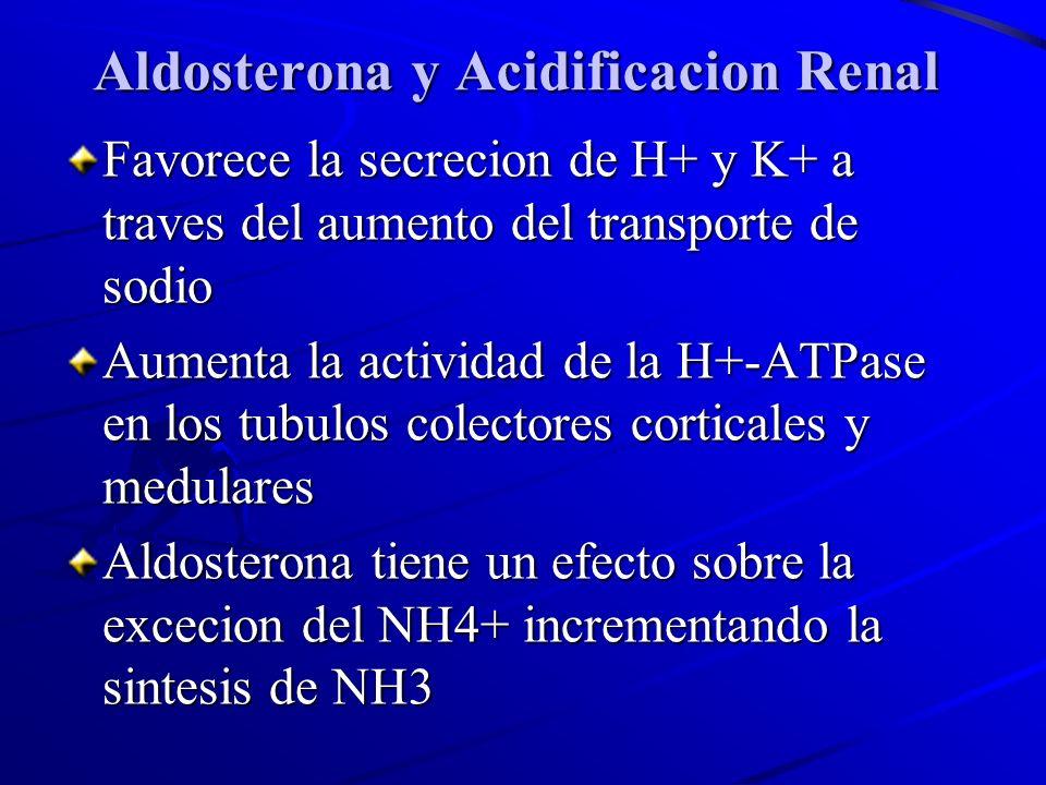 Aldosterona y Acidificacion Renal