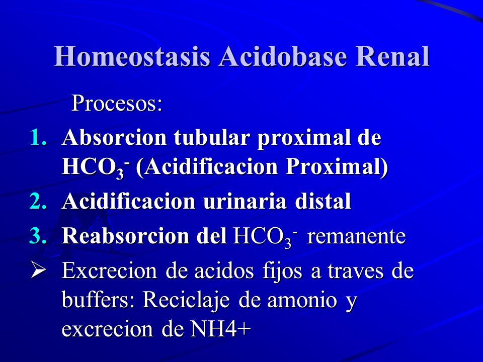 Homeostasis Acidobase Renal