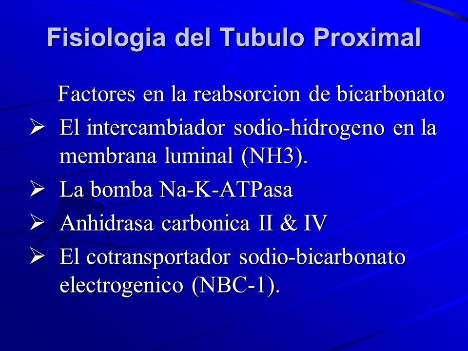 Fisiologia del Tubulo Proximal
