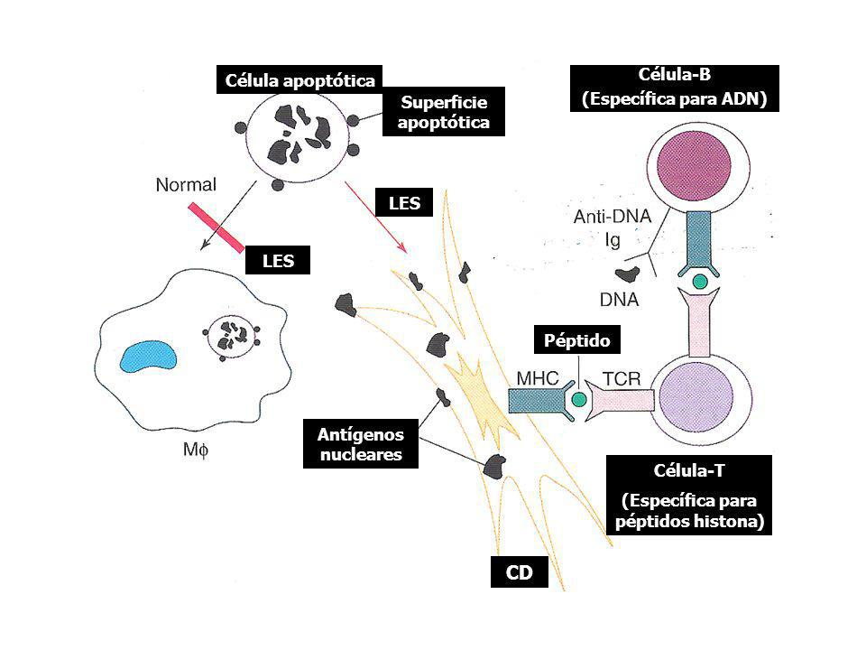 Superficie apoptótica (Específica para péptidos histona)